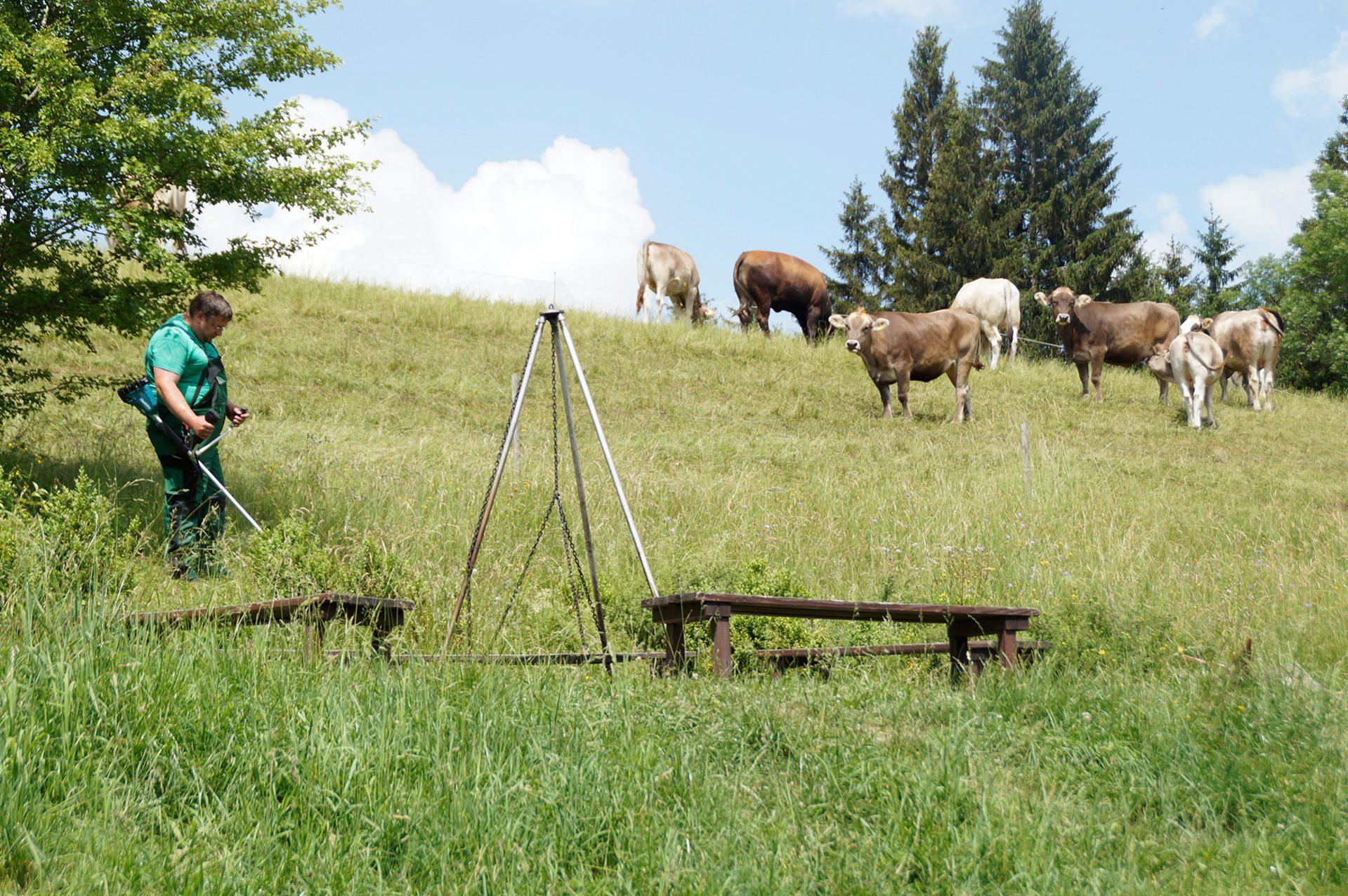 traurig beobachtet die Kuh das Rasenmähen