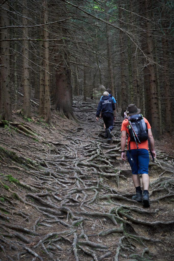 Steiler Aufstieg über Wurzeln